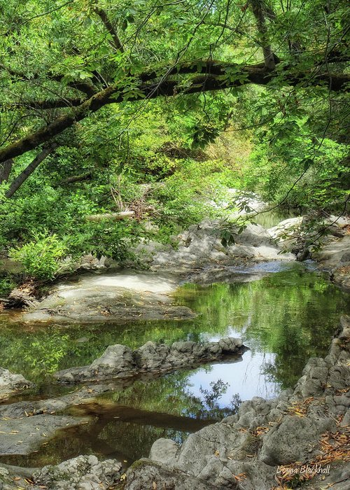 Creek Greeting Card featuring the photograph Down By The Creek by Donna Blackhall