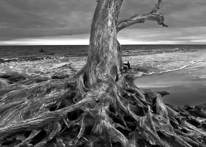 Clouds Greeting Card featuring the photograph Driftwood On Jekyll Island Black And White by Debra and Dave Vanderlaan