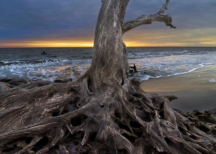 Clouds Greeting Card featuring the photograph Driftwood On Jekyll Island by Debra and Dave Vanderlaan