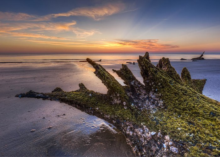 Clouds Greeting Card featuring the photograph Driftwood On The Beach by Debra and Dave Vanderlaan