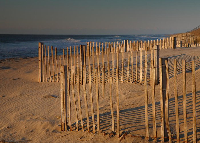 Dunes Greeting Card featuring the photograph Dune Fences At First Light I by Steven Ainsworth