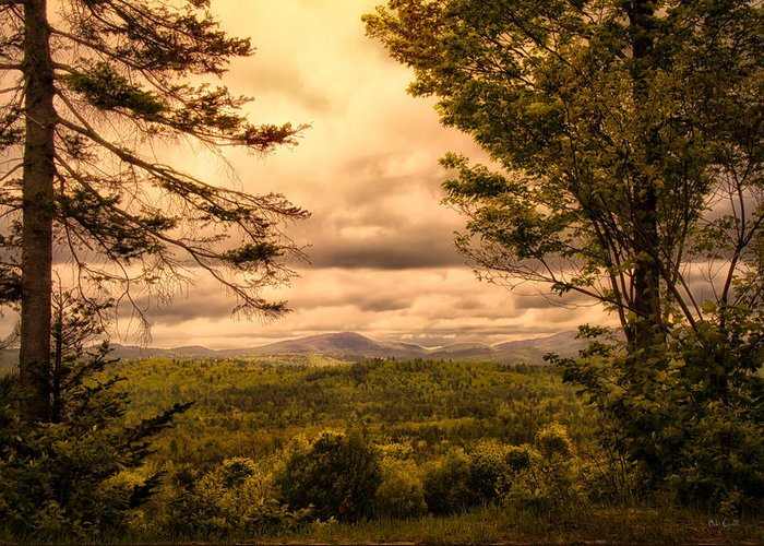 Appalachian Trail Greeting Card featuring the photograph Early Spring Rain by Bob Orsillo