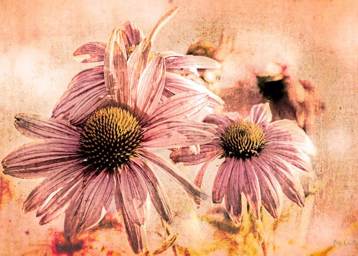 Flower Greeting Card featuring the photograph Echinacea Impressions by Bob Orsillo