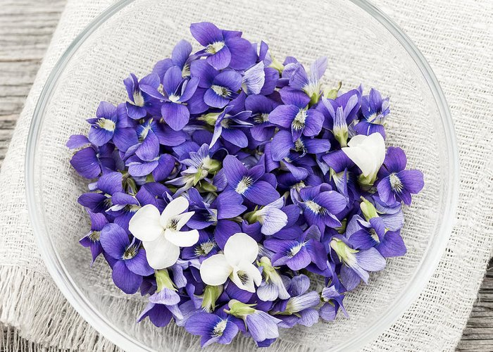 Violets Greeting Card featuring the photograph Edible Violets by Elena Elisseeva