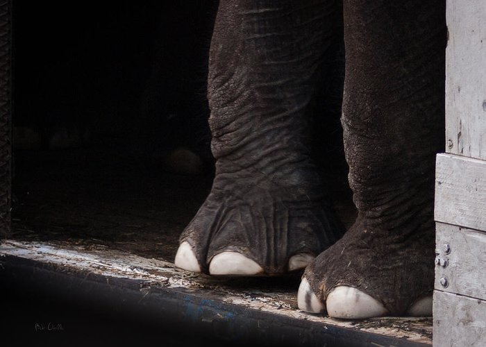Elephant Greeting Card featuring the photograph Elephant Toes by Bob Orsillo
