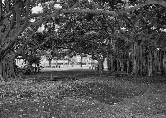 Park Benches Greeting Card featuring the photograph Embraced By Trees by Douglas Barnard