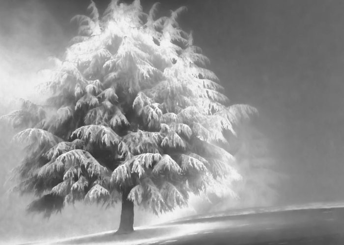 Beauty Greeting Card featuring the photograph Enlightened Tree by Don Schwartz