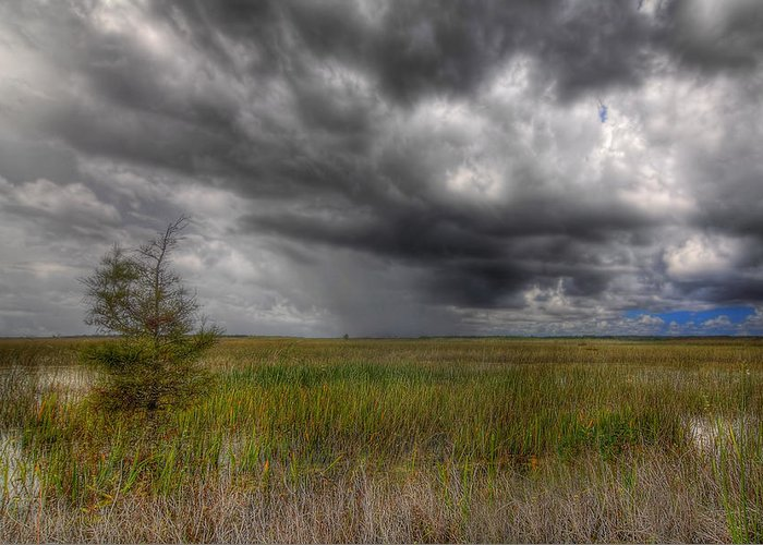 Bush Greeting Card featuring the photograph Everglades Storm by Rudy Umans