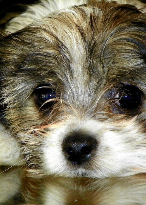 Puppies Greeting Card featuring the photograph Eyes On You by Karen Wiles