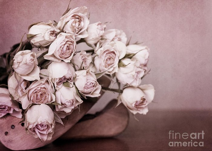Rose Greeting Card featuring the photograph Fade Away by Priska Wettstein