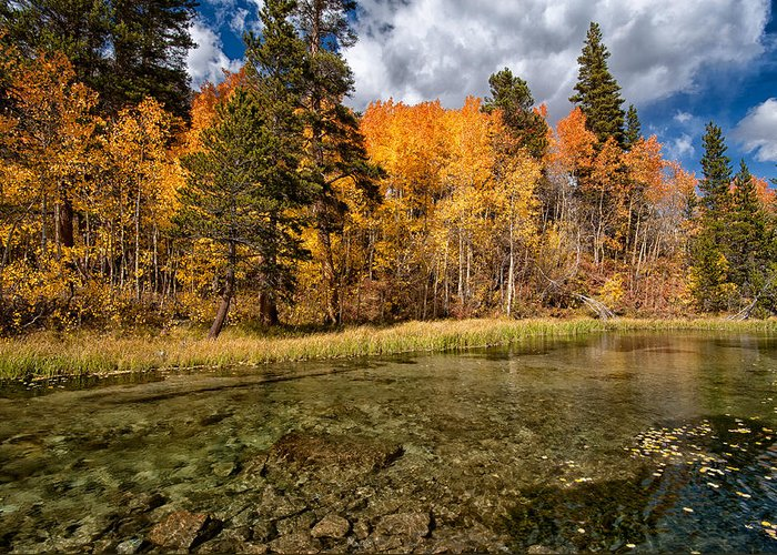Fall Greeting Card featuring the photograph Fall Along Bishop Creek by Cat Connor