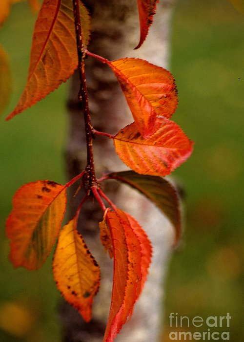 Fall Greeting Card featuring the photograph Fall Beauty by Sharon Elliott