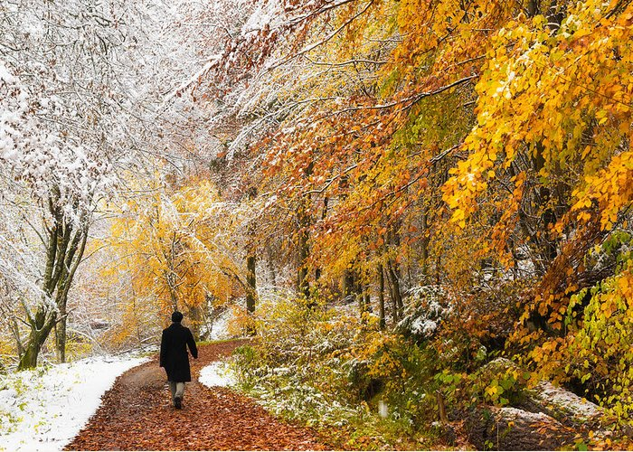 Fall Greeting Card featuring the photograph Fall Or Winter - Autumn Colors And Snow In The Forest by Matthias Hauser