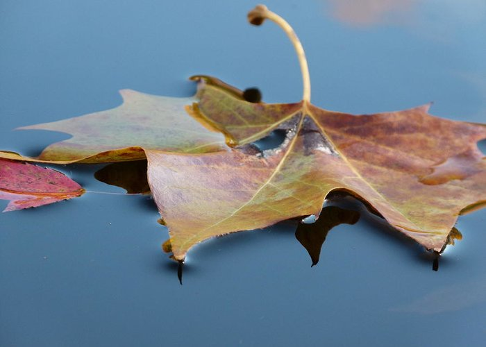 Leaves Greeting Card featuring the photograph Fall Reflections by Jane Ford