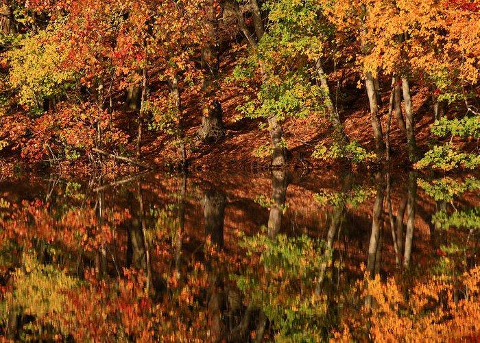 Fall Reflections Greeting Card by Karol Livote