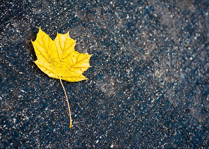 Fall Greeting Card featuring the photograph Fallen by Sebastian Musial