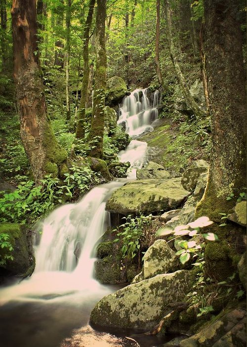 Waterfall Greeting Card featuring the photograph Falls In The Smokies by Marty Koch