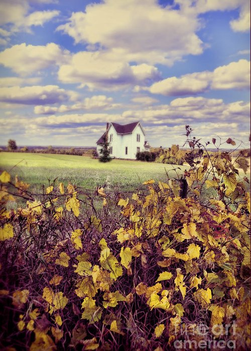 Grapevines Greeting Card featuring the photograph Farmhouse And Grapevines by Jill Battaglia