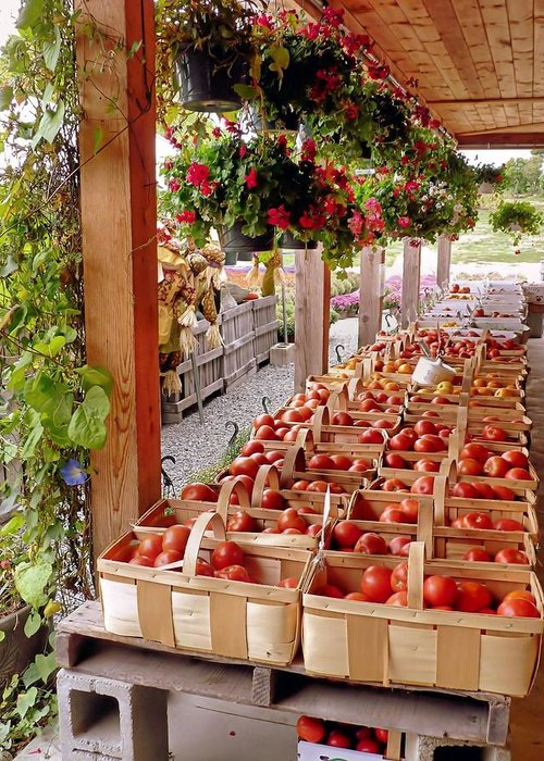Farmstand Greeting Card featuring the photograph Farmstand by Janice Drew