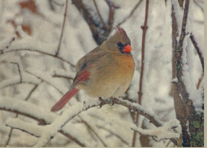 Bird Greeting Card featuring the photograph Female Cardinal In The Snow II by Sandy Keeton