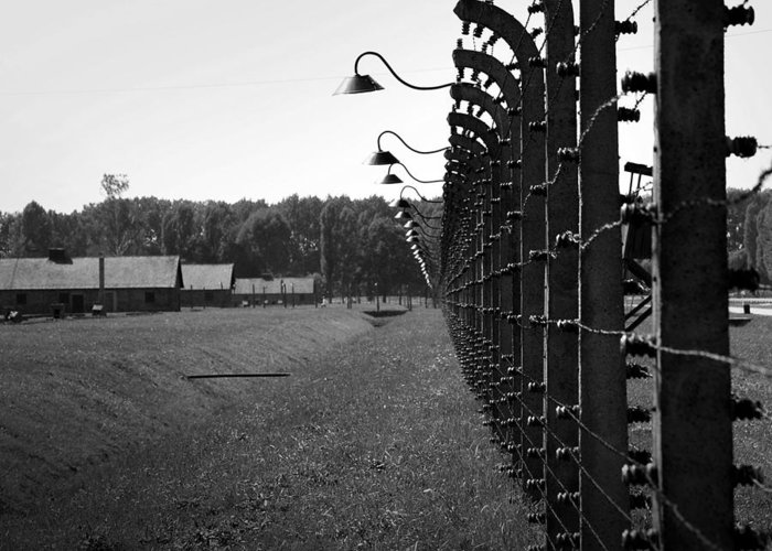 Auschwitz Greeting Card featuring the photograph Fence Of Death by Mountain Dreams