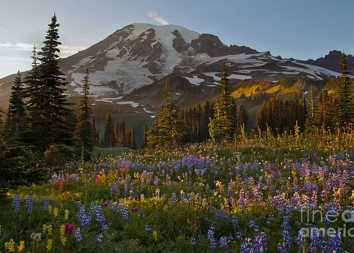 Rainier Greeting Card featuring the photograph Field Of Dreams by Mike Reid