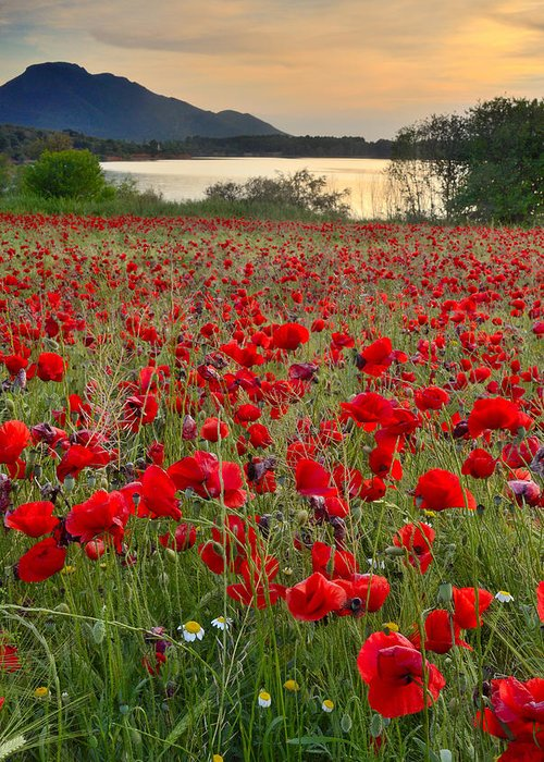 Poppies Greeting Card featuring the photograph Field Of Poppies At The Lake by Guido Montanes Castillo