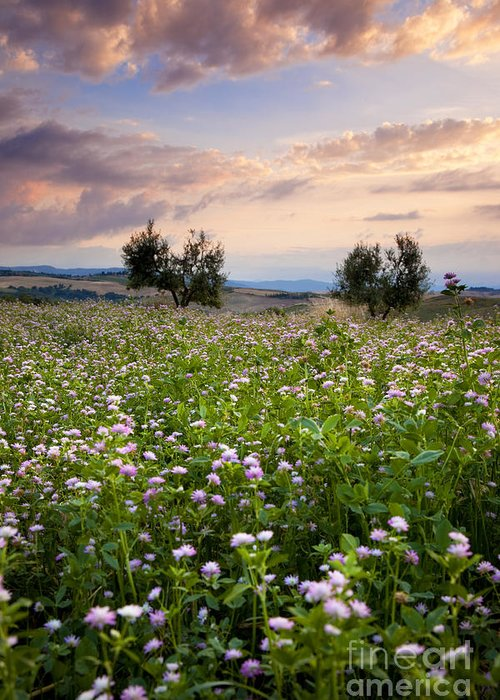 Field Greeting Card featuring the photograph Field Of Wildflowers by Brian Jannsen