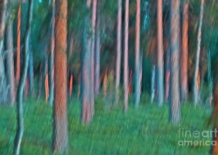Nature Greeting Card featuring the photograph Finland Forest by Heiko Koehrer-Wagner