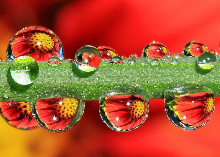 Water Drops Greeting Card featuring the photograph Firey Drops by Gary Yost