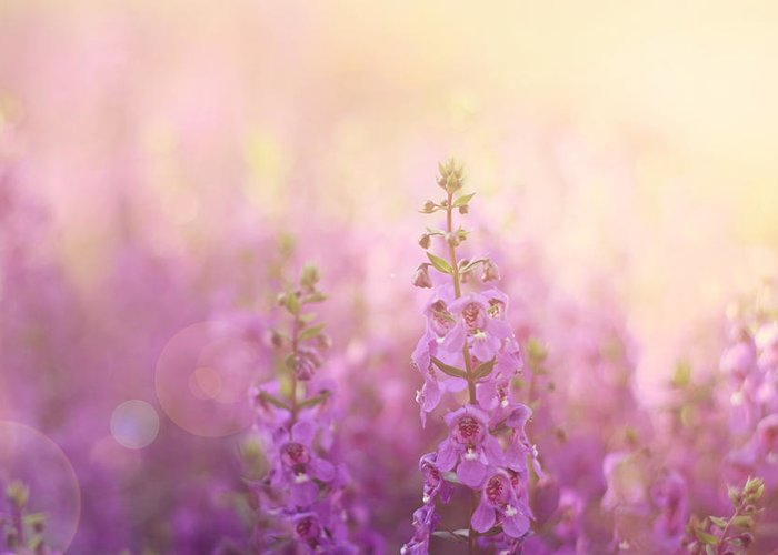 Flowers In Sunlight Greeting Card featuring the photograph First Light by Amy Tyler