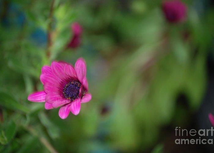 Flower Greeting Card featuring the photograph Flower Bokeh by Jordan Rusin