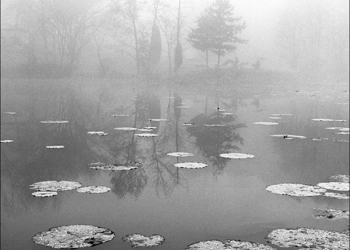 Kentucky Greeting Card featuring the photograph Foggy Morning by Wendell Thompson