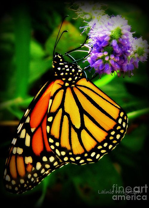 Monarch Greeting Card featuring the photograph Food For Flight by Lainie Wrightson