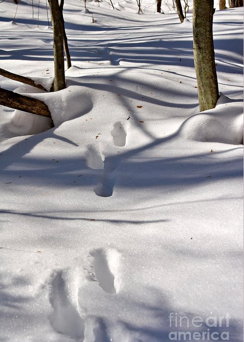 Landscape Greeting Card featuring the photograph Footprints In The Snow by Louise Heusinkveld