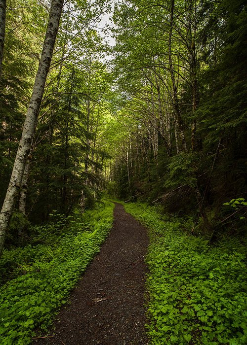Northwest Greeting Card featuring the photograph Forest Beckons by Mike Reid