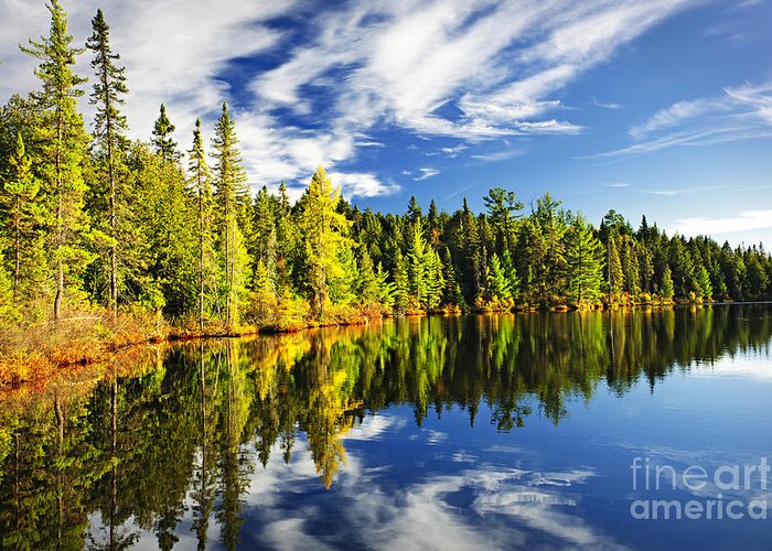 Lake Greeting Card featuring the photograph Forest Reflecting In Lake by Elena Elisseeva