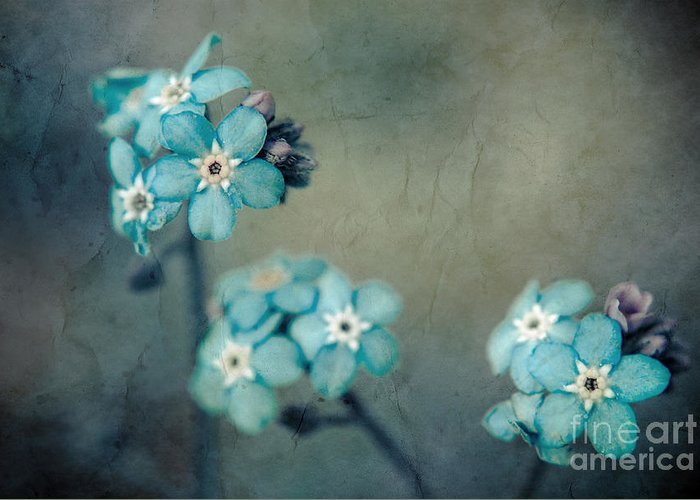 Blue Greeting Card featuring the photograph Forget Me Not 01 - S22dt06 by Variance Collections