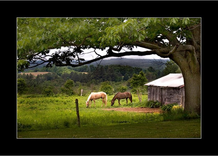 Horses Greeting Card featuring the photograph Framed by Don Powers