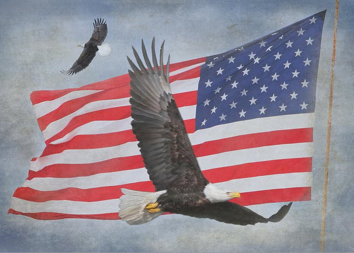 Freedom Greeting Card featuring the photograph Freedom Flight by Angie Vogel