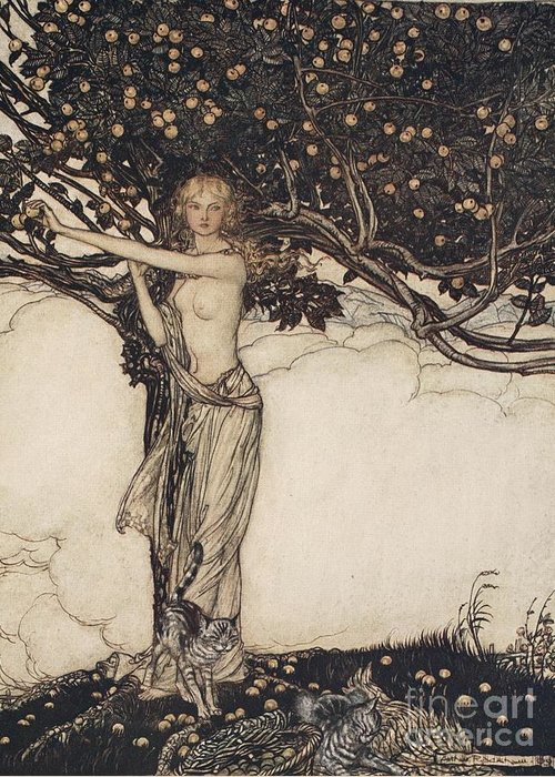 Der Ring Des Nibelungen; The Ring Of The Nibelung; Myth; Legend; Opera; The Ring Cycle; Das Rheingold; Richard Wagner; Viking; Norse Mythology; Female; Goddess; Keeper; Apples; Fruit; Tree; Cat; Cats; Basket; Fruit Picking; Fantasy; Freya; Nude Greeting Card featuring the drawing Freia The Fair One Illustration From The Rhinegold And The Valkyrie by Arthur Rackham