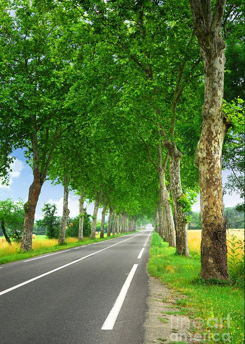 Road Greeting Card featuring the photograph French Country Road by Elena Elisseeva