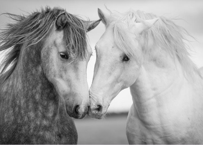 Horse Greeting Card featuring the photograph Friends Iv by Tim Booth
