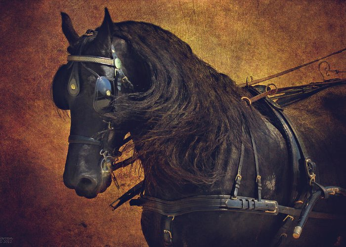 Carriage Horse Greeting Card featuring the photograph Friesian Under Harness by Lyndsey Warren