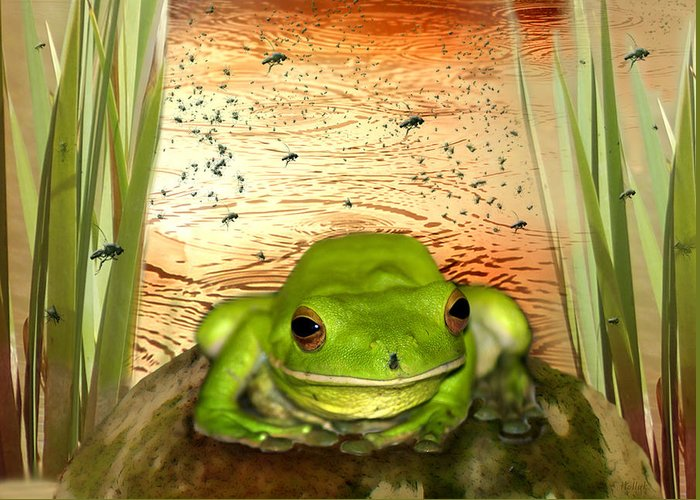 Nature Greeting Card featuring the photograph Froggy Heaven by Holly Kempe