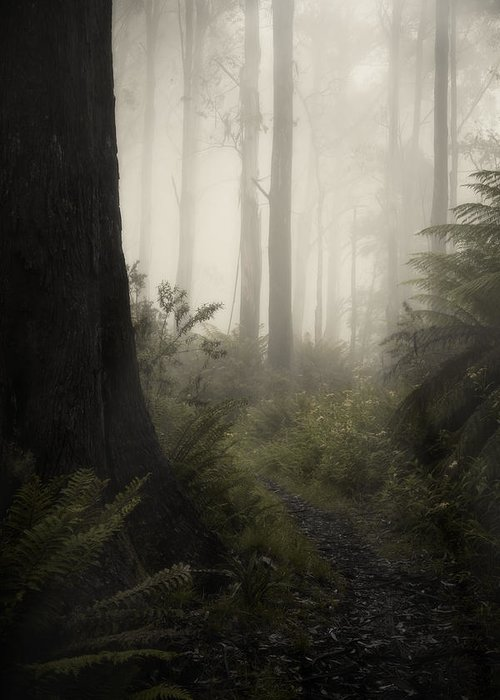 Fog Greeting Card featuring the photograph From Darkness by Amy Weiss
