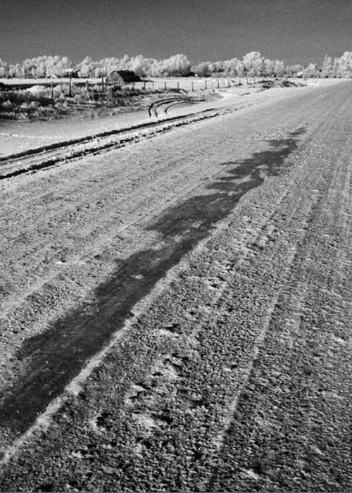 Salt Greeting Card featuring the photograph frozen salt and grit covered rural small road in Forget Saskatchewan Canada by Joe Fox