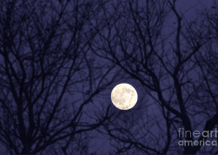 Moon Greeting Card featuring the photograph Full Moon Bare Branches by Thomas R Fletcher