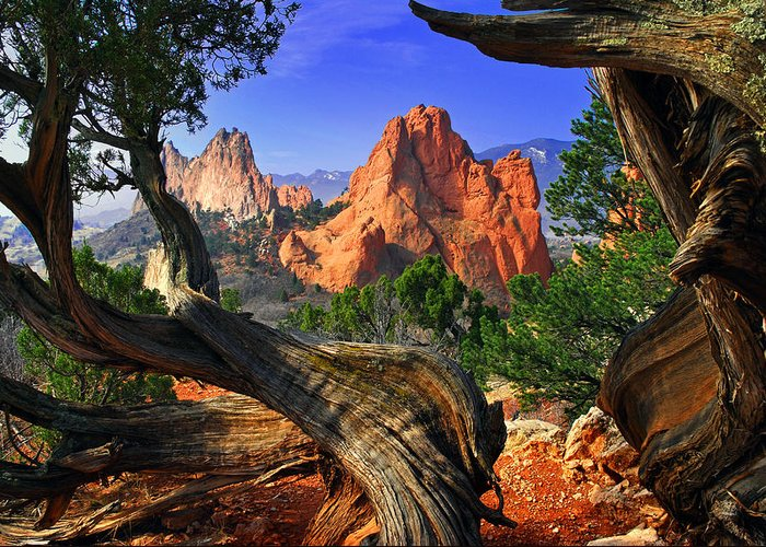Garden Of The Gods Greeting Card featuring the photograph Garden Framed By Twisted Juniper Trees by John Hoffman