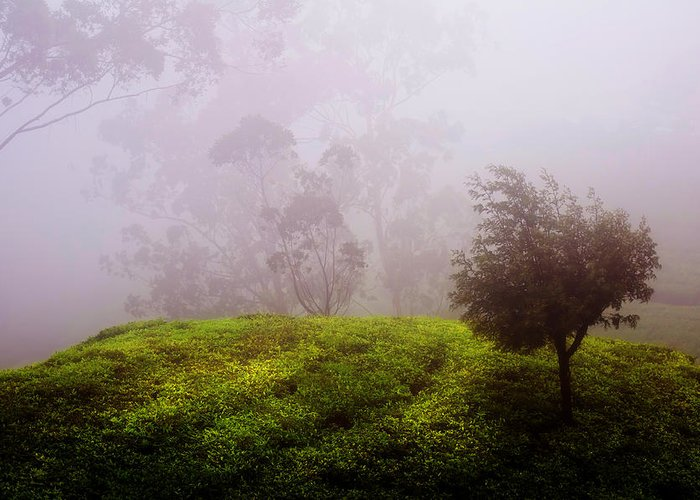 Sri Lanka Greeting Card featuring the photograph Ghost Tree In The Haunted Forest. Nuwara Eliya. Sri Lanka by Jenny Rainbow